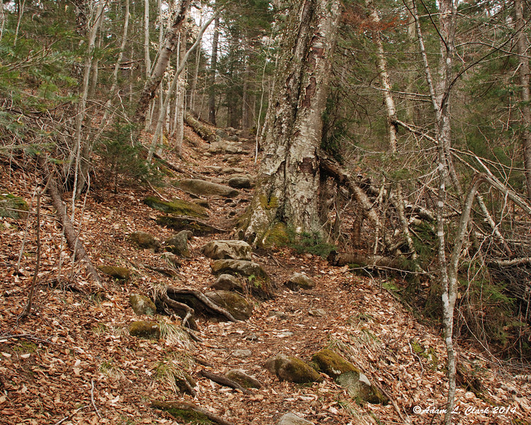 At times, the trail would have short bursts of steeper terrain