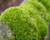 This moss looks kind of like green hair growing off the rocks