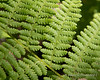A look at the ferns along the trail