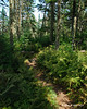 The trail between the peaks is lined with ferns much of the way