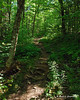 After a stretch on an old logging road, the trail turns off into the woods still not getting overly steep