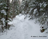 The trail going over a couple wet spots (icy today)  that make for some small humps in the trail