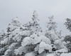 Snow encrusted trees at the summit