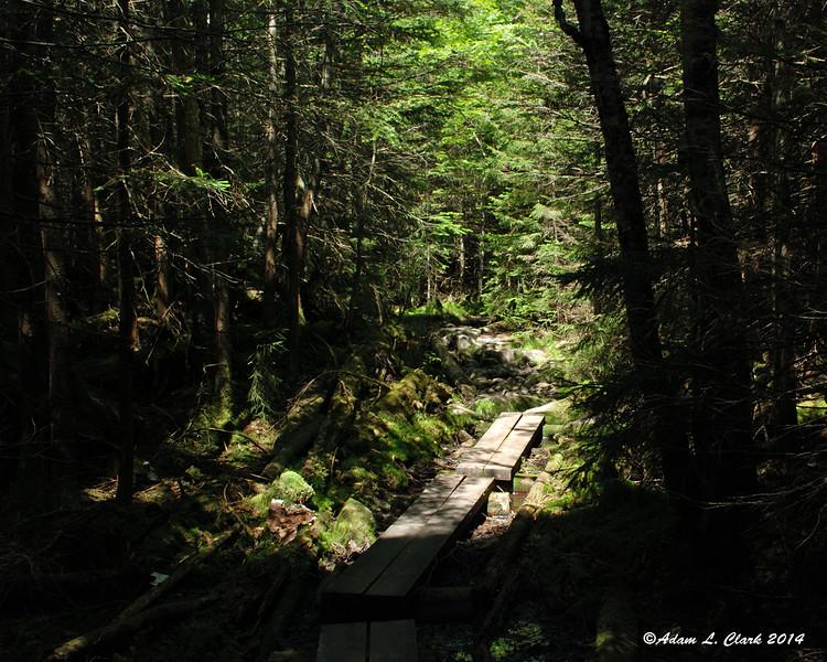 Bog bridges in a damp spot on the trail