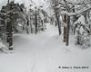 A gradual climb through snow covered trees