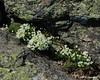 Alpine plants find soil in the cracks between rocks