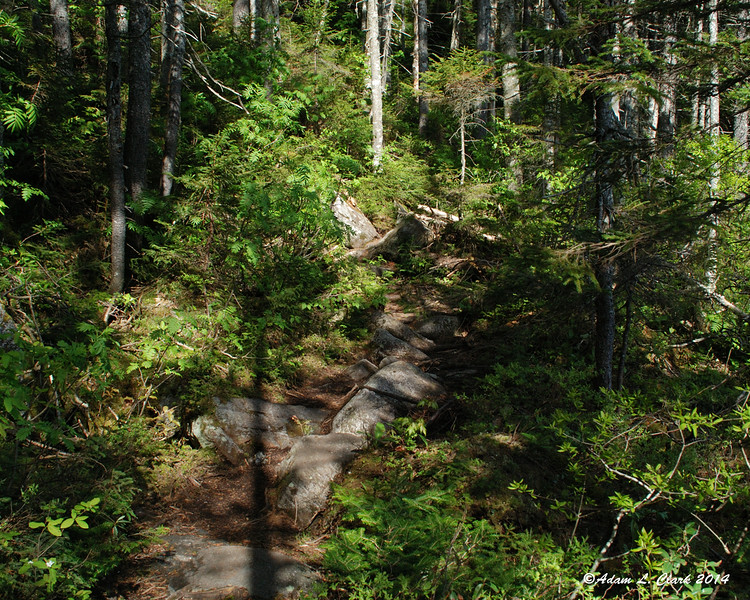 The trail leading around Ethel Pond had some large rocks, but was pretty easy