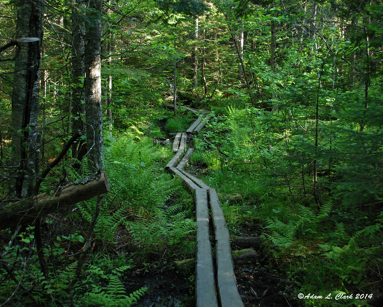 A nice stretch of bog bridges early on the trail