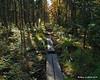 Back on the trail with more bog bridges