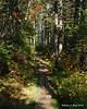 The Ethan Pond Trail had plenty of bog bridges along it