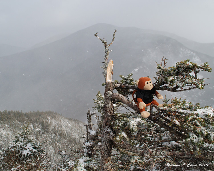 Miles perches on a tree for his summit photo