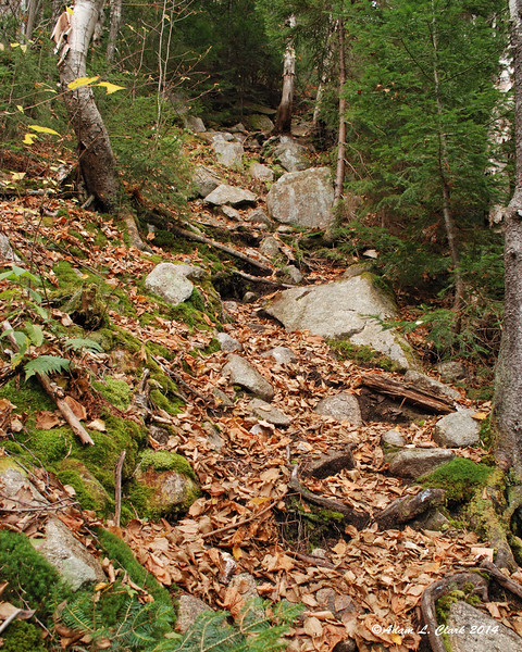Just above this section there were 4 separate Spruce Grouse that flew off as I got near each of them