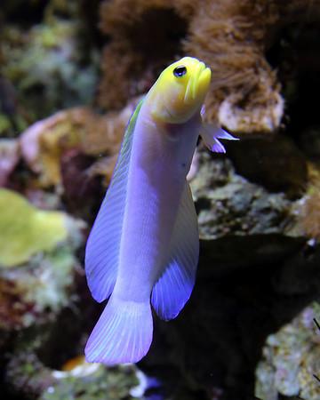 New England Aquarium 2014