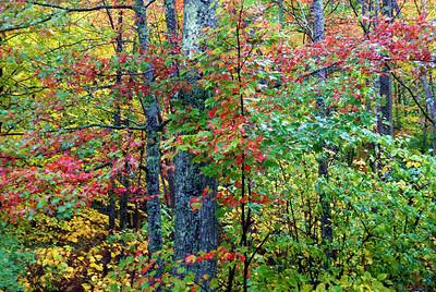 Fall color, Acadia N.P.