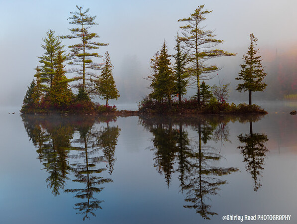 Ricker pond pine trees in fog backed by fall foliage