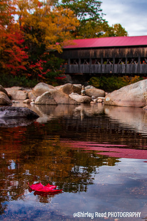 Red Maple under Albany covered Bridge