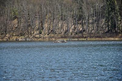 Another beaver dam