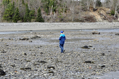 Landry exploring during low tide at Bar Harbor.