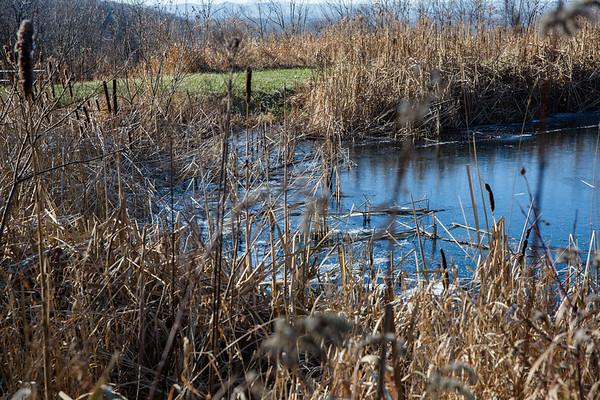 Cattails and a Half Frozen Pond