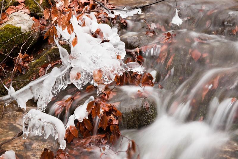 Batten Kill Feeder Creek in Autumn
