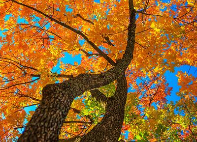 Texas Fall Color