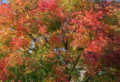 Texas Fall Color