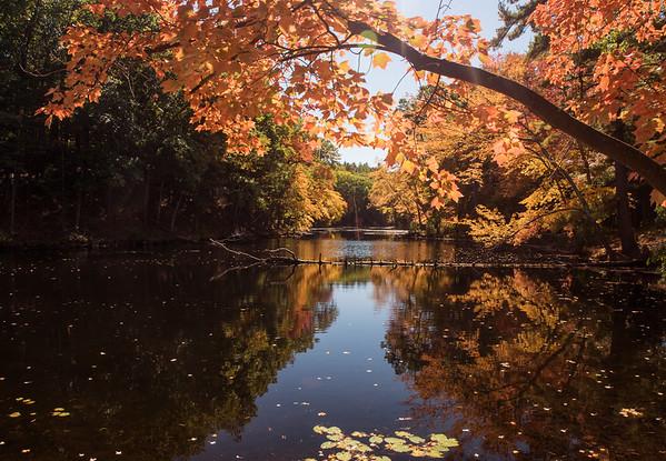 Fall - Locust Pond III