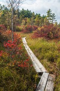 Ponemah Bog Trail