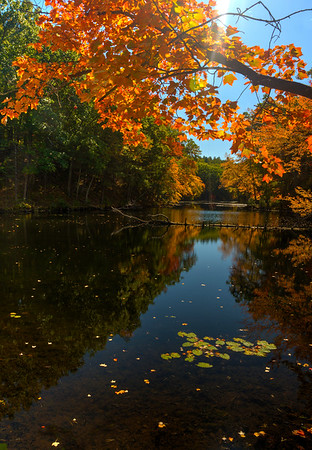 Fall - Locust Pond I