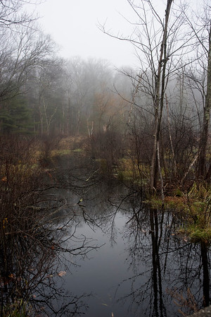 Fog on Beaver Brook