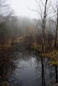 Fog on Beaver Brook