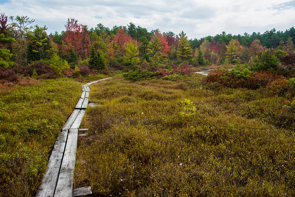 Crossing the Bog