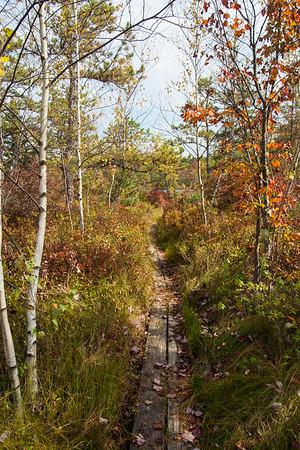 Bog Path