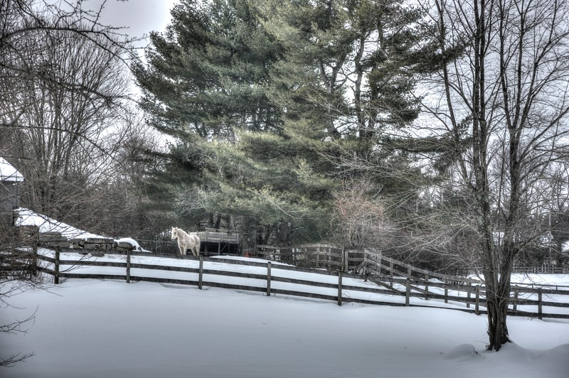 Winter Barnyard