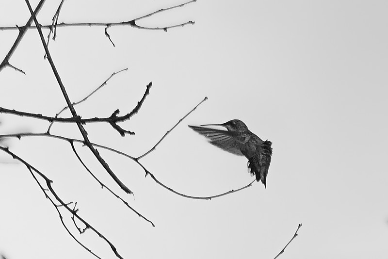 flight in black and white