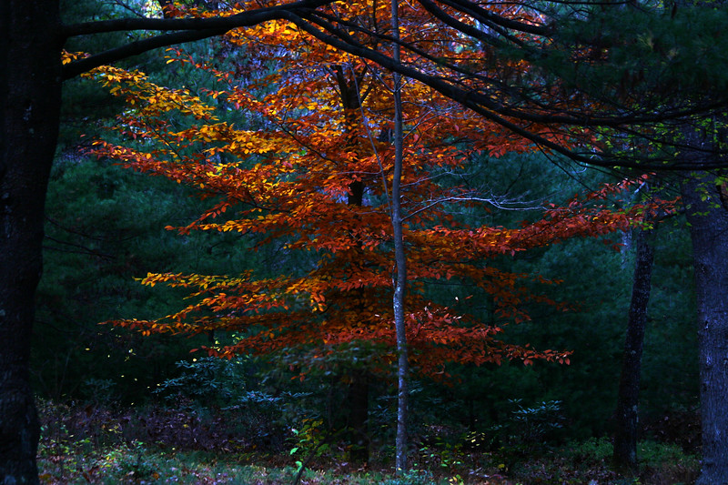 Color in the forest, Tower Hill Botanical, Boylston, MA