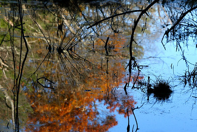 Fall Reflections, Broadmoor Wildlife Sanctuary, Natick MA
