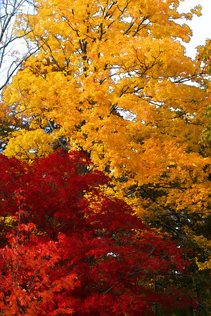 A little fall color for this year- last year's colors are here   http://www.pjsphotoandgraphics.com/My-Photos/New-England-Views/Fall-Colors-of-New-England/5870288_B4GHz