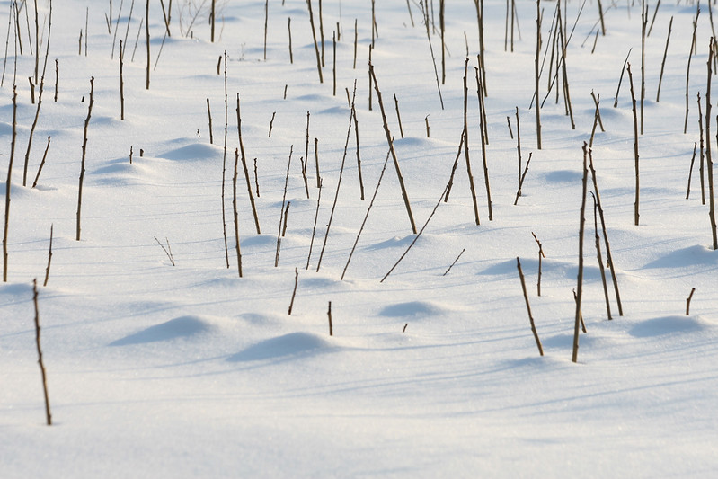 Sun on the snow at Broadmoor Wildlife Sanctuary, Natick, Ma