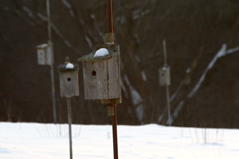 Bird houses, Broadmoor Wildlife Sanctuary, Natick, Ma