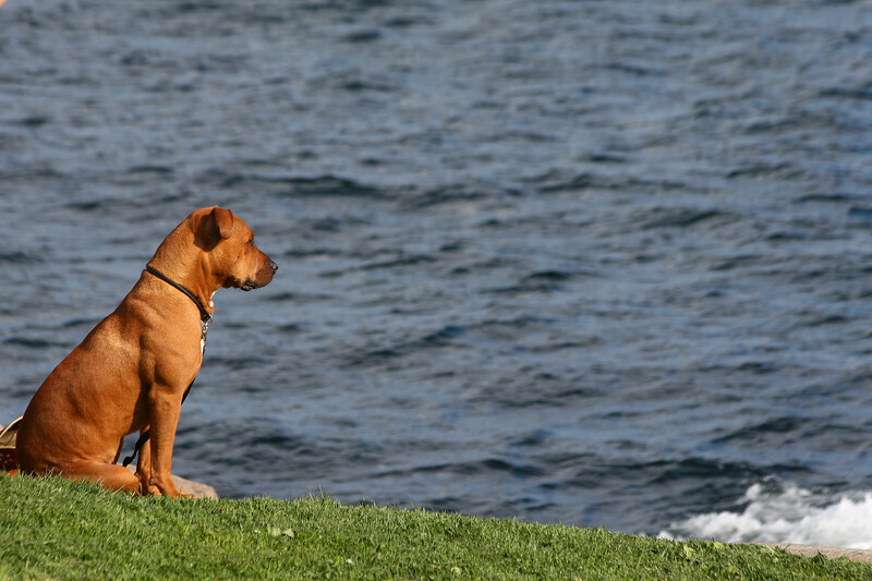 Watching the surf, York, Maine