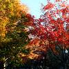 021 Boston Public Garden