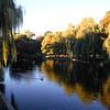 020 Boston Public Garden