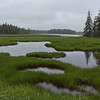 Salt marsh near Bass Harbor