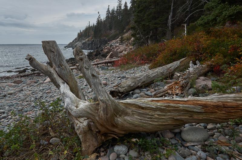Driftwood at Hunters Beach
