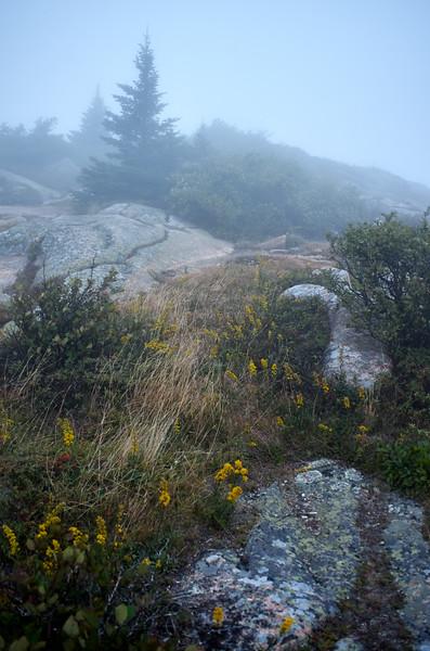 Mist on Mt Cadillac