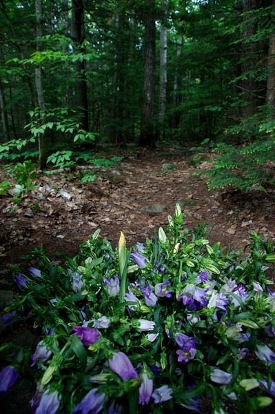 Flowers and woods