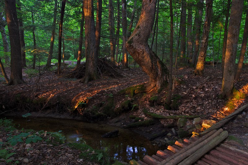 Evening light in the woods