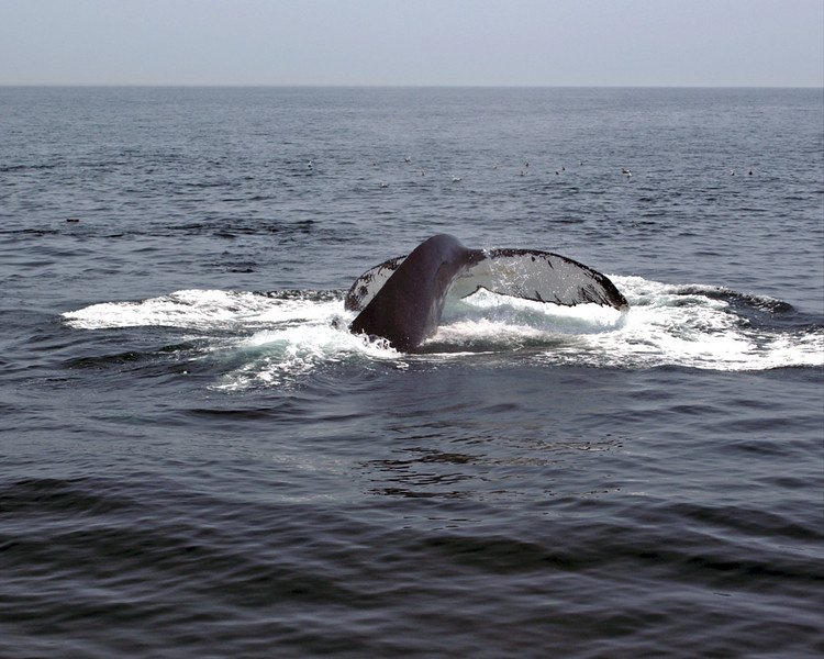 2007 Whale Watch