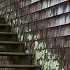 Stairs with Lichen